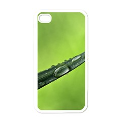 Green Drops Apple iPhone 4 Case (White)