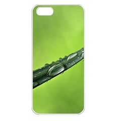 Green Drops Apple iPhone 5 Seamless Case (White)