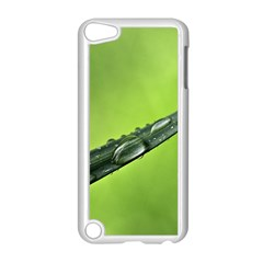 Green Drops Apple iPod Touch 5 Case (White)