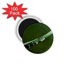 Grass Drops 1.75  Button Magnet (100 pack)