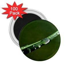 Grass Drops 2.25  Button Magnet (100 pack)
