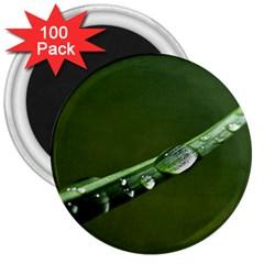 Grass Drops 3  Button Magnet (100 pack)