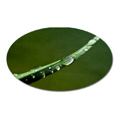 Grass Drops Magnet (Oval)