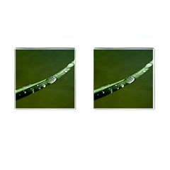 Grass Drops Cufflinks (Square)