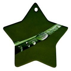 Grass Drops Star Ornament (Two Sides)