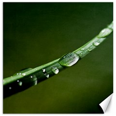 Grass Drops Canvas 20  X 20  (unframed)