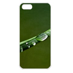 Grass Drops Apple iPhone 5 Seamless Case (White)