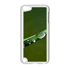 Grass Drops Apple iPod Touch 5 Case (White)