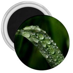 Grass Drops 3  Button Magnet