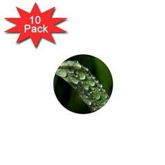 Grass Drops 1  Mini Button Magnet (10 pack)