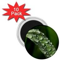Grass Drops 1.75  Button Magnet (10 pack)
