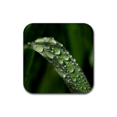 Grass Drops Drink Coaster (square)