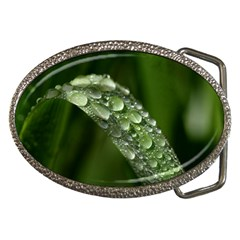 Grass Drops Belt Buckle (Oval)