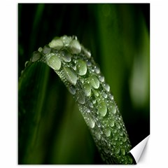 Grass Drops Canvas 16  x 20  (Unframed)