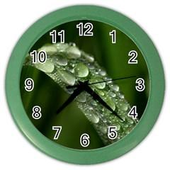 Grass Drops Wall Clock (color)