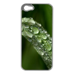 Grass Drops Apple iPhone 5 Case (Silver)