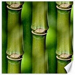 Bamboo Canvas 20  X 20  (unframed)