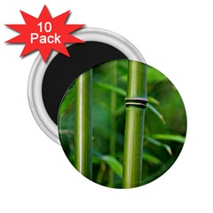 Bamboo 2.25  Button Magnet (10 pack)