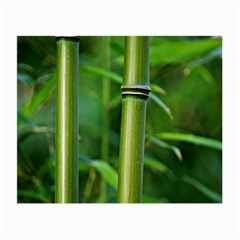 Bamboo Glasses Cloth (Small, Two Sided)