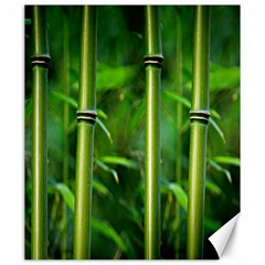 Bamboo Canvas 20  x 24  (Unframed)