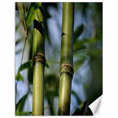 Bamboo Canvas 12  X 16  (unframed)