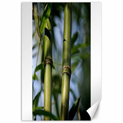 Bamboo Canvas 24  x 36  (Unframed)