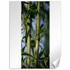 Bamboo Canvas 36  x 48  (Unframed)