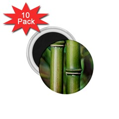 Bamboo 1 75  Button Magnet (10 Pack)