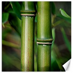 Bamboo Canvas 20  X 20  (unframed)