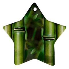 Bamboo Star Ornament