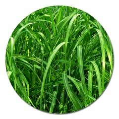 Grass Magnet 5  (Round)