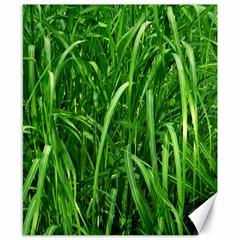 Grass Canvas 8  X 10  (unframed)