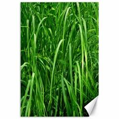 Grass Canvas 12  x 18  (Unframed)