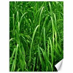 Grass Canvas 18  X 24  (unframed)
