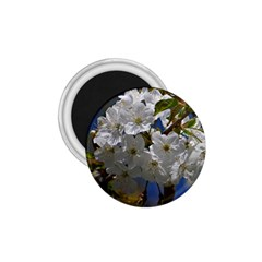 Cherry Blossom 1.75  Button Magnet
