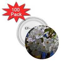 Cherry Blossom 1 75  Button (100 Pack)