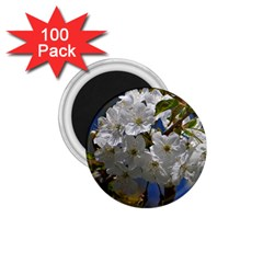 Cherry Blossom 1 75  Button Magnet (100 Pack)
