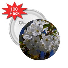 Cherry Blossom 2.25  Button (100 pack)
