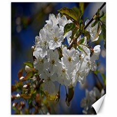 Cherry Blossom Canvas 8  x 10  (Unframed)