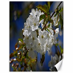 Cherry Blossom Canvas 18  x 24  (Unframed)