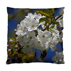 Cherry Blossom Cushion Case (single Sided)