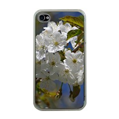 Cherry Blossom Apple iPhone 4 Case (Clear)