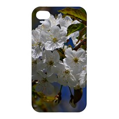 Cherry Blossom Apple iPhone 4/4S Hardshell Case