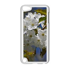 Cherry Blossom Apple iPod Touch 5 Case (White)