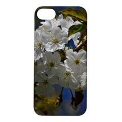 Cherry Blossom Apple iPhone 5S Hardshell Case