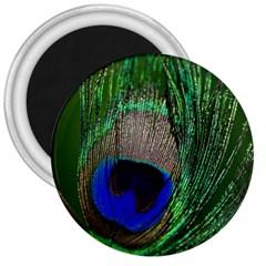 Peacock 3  Button Magnet