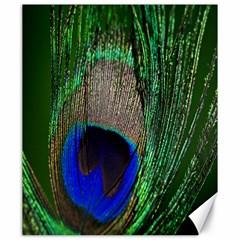 Peacock Canvas 20  X 24  (unframed)