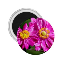 Flower 2.25  Button Magnet