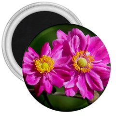 Flower 3  Button Magnet