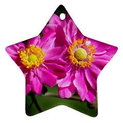 Flower Star Ornament (two Sides)